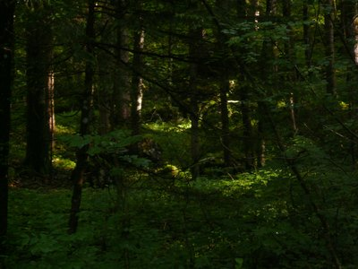 Wald um La Push